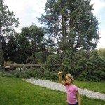arbre--150x150